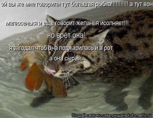 Котоматрица: эй вы же мне говорили тут большая рыбка!!!!!!!!!!! а тут вон малюсенькя и ещё говорит желанья исолняет!!! я загодал чтоб она поджарилась и в рот  а