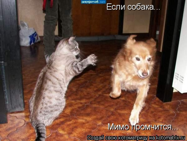 Котоматрица: Если собака... Мимо промчится...