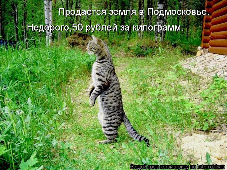 Котоматрица: Продается земля в Подмосковье. Недорого,50 рублей за килограмм.