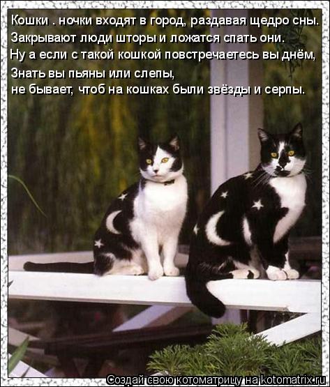 Котоматрица: Кошки – ночки входят в город, раздавая щедро сны. Закрывают люди шторы и ложатся спать они. Ну а если с такой кошкой повстречаетесь вы днём,