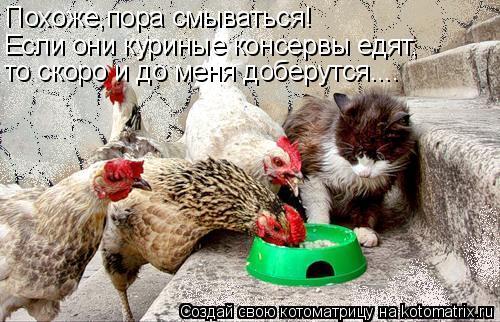 Котоматрица: Похоже,пора смываться! Если они куриные консервы едят, то скоро и до меня доберутся....