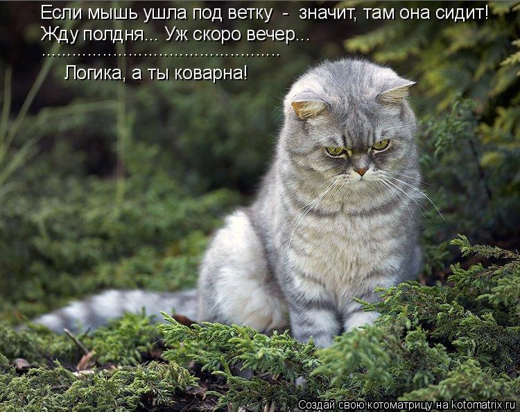 Котоматрица: Если мышь ушла под ветку  -  значит, там она сидит! Жду полдня..… Уж скоро вечер…….  ............................................... Логика, а ты кова