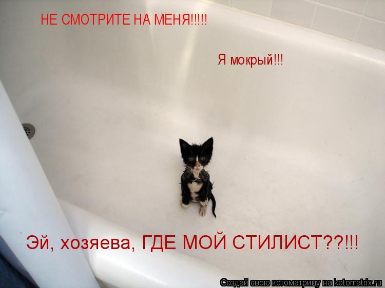 Котоматрица: НЕ СМОТРИТЕ НА МЕНЯ!!!!! Я мокрый!!! Эй, хозяева, ГДЕ МОЙ СТИЛИСТ??!!!