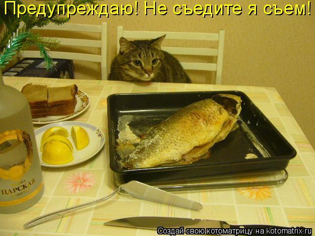 Котоматрица: Предупреждаю! Не съедите я съем!