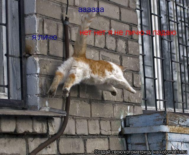 Котоматрица: я личю  аааааа нет нет я не личю я падаю