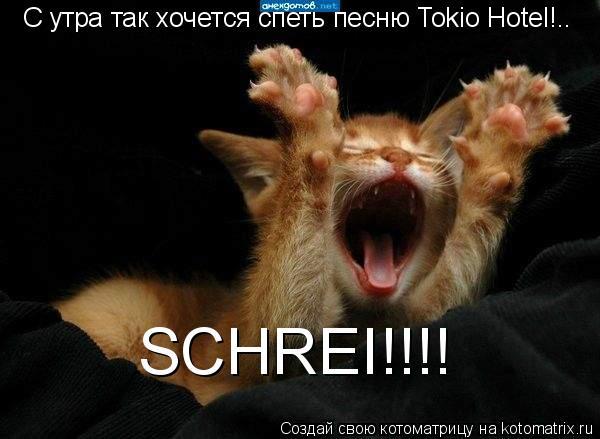 Котоматрица: C утра так хочется спеть песню Tokio Hotel!.. SCHREI!!!!