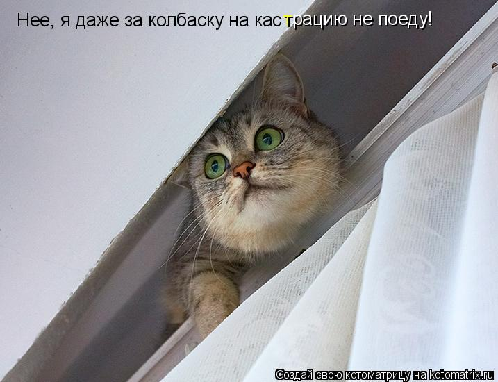 Котоматрица: Нее, я даже за колбаску на кас рацию не поеду! т