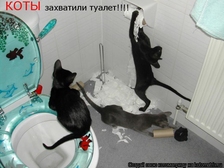 Котоматрица: захватили туалет!!!! КОТЫ