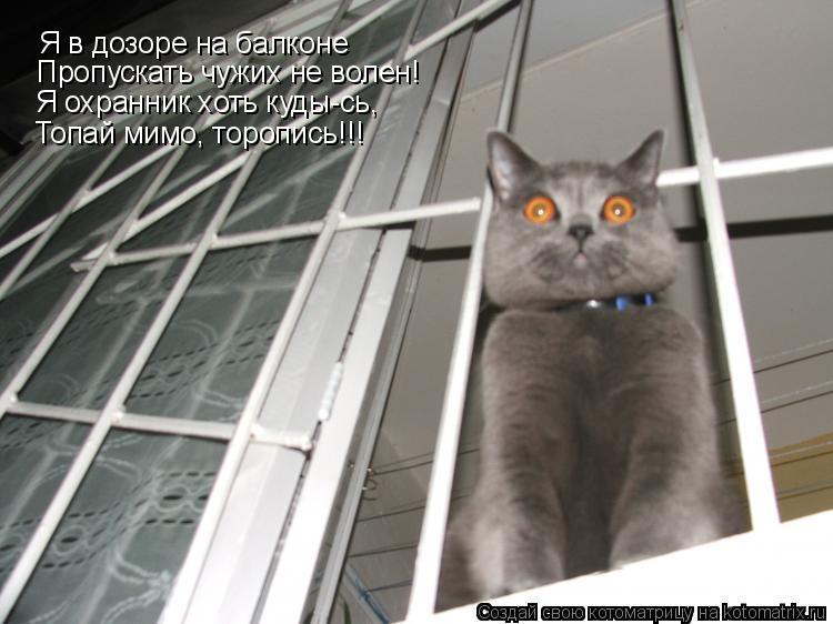 Котоматрица: Я в дозоре на балконе Пропускать чужих не волен! Я охранник хоть куды-сь, Топай мимо, торопись!!!