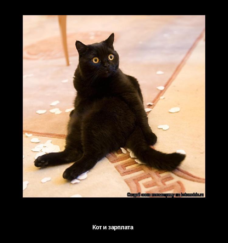 Котоматрица: Да откуда же я знаю, кто всю зарплату порвал!!!! Кот и зарплата