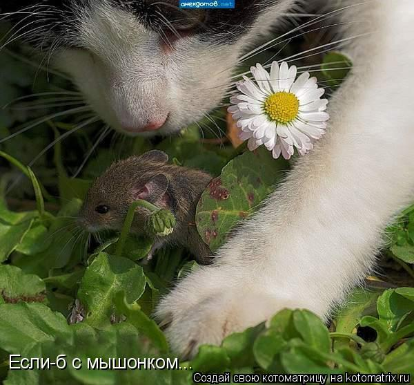 Котоматрица: Если-б с мышонком...