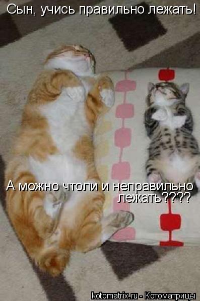 Котоматрица: Сын, учись правильно лежать! А можно чтоли и неправильно лежать????