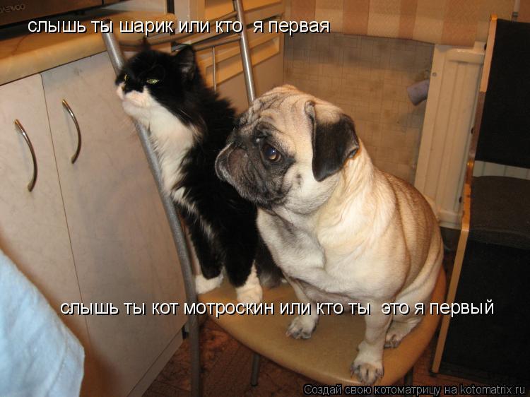 Котоматрица: слышь ты шарик или кто  я первая слышь ты кот мотроскин или кто ты  это я первый