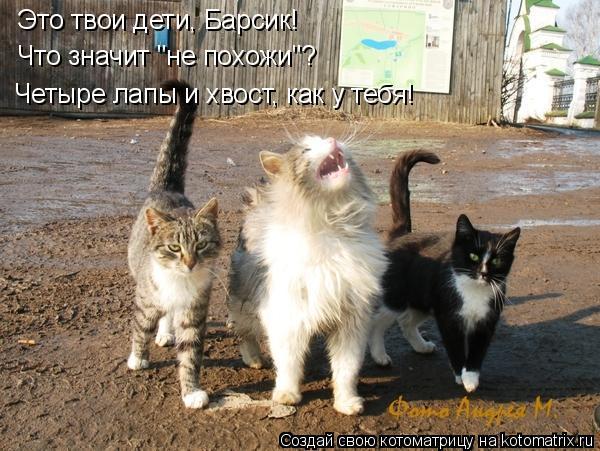 """Котоматрица: Это твои дети, Барсик! Что значит """"не похожи""""? Четыре лапы и хвост, как у тебя!"""