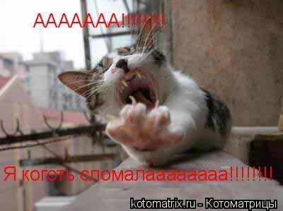 Котоматрица: Я коготь сломалаааааааа!!!!!!!! ААААААА!!!!!!!!