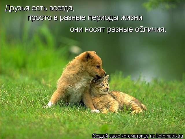 Котоматрица: Друзья есть всегда,  просто в разные периоды жизни  они носят разные обличия.