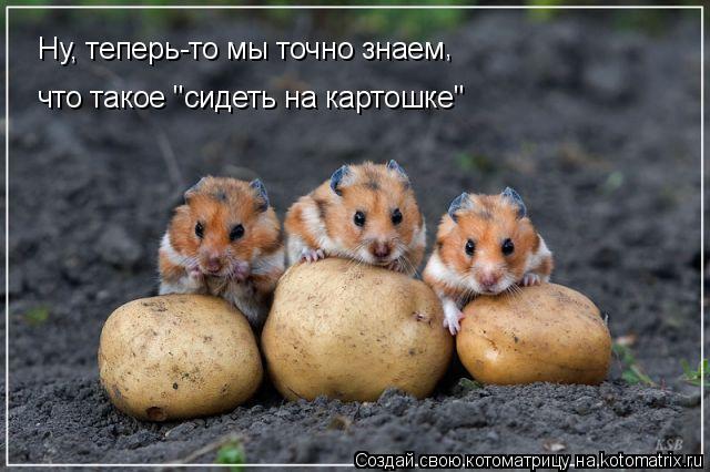 """Котоматрица: Ну, теперь-то мы точно знаем , что такое """"сидеть на картошке"""""""