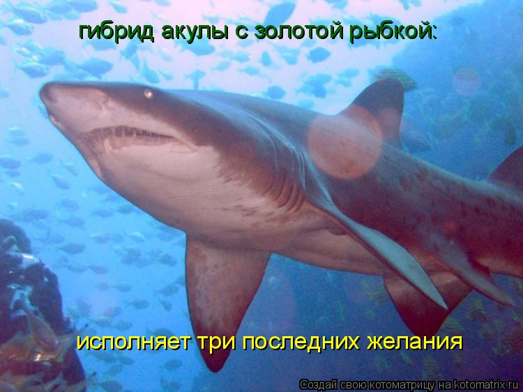 Котоматрица: гибрид акулы с золотой рыбкой: исполняет три последних желания