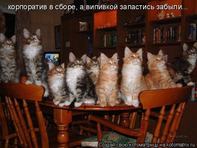 Котоматрица: корпоратив в сборе, а випивкой запастись забыли...