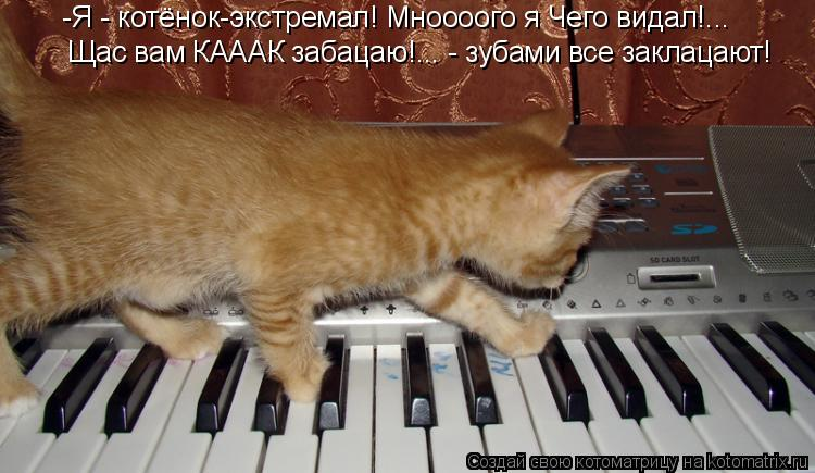 Котоматрица: Щас вам КАААК забацаю!... - зубами все заклацают! -Я - котёнок-экстремал! Мноооого я Чего видал!...