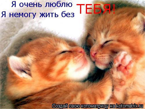 Котоматрица: Я немогу жить без Я очень люблю ТЕБЯ!
