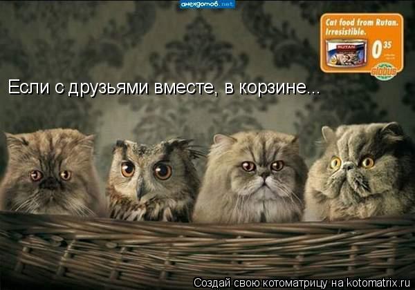 Котоматрица: Если с друзьями вместе, в корзине...