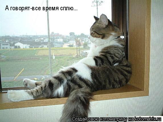 Котоматрица: А говорят-все время сплю...