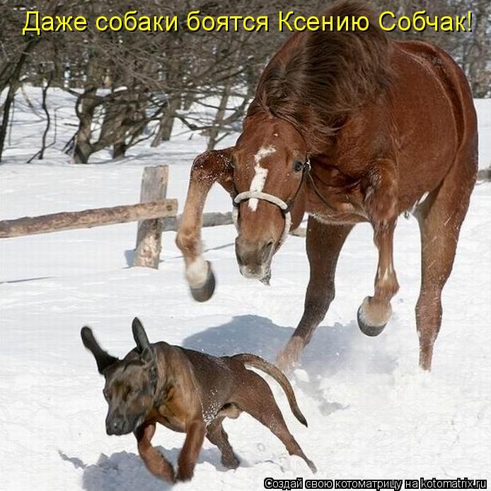 Котоматрица: Даже собаки боятся Ксению Собчак!