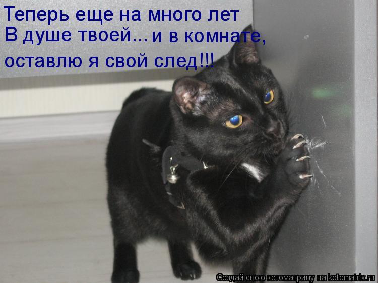 Котоматрица: Теперь еще на много лет Теперь еще на много лет В душе твоей...  и в комнате,  оставлю я свой след!!!