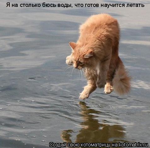 Котоматрица: Я на столько бюсь воды, что готов научится летать