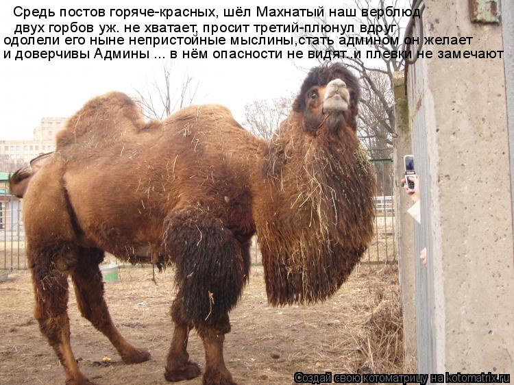 Котоматрица: Средь постов горяче-красных, шёл Махнатый наш верблюд двух горбов уж. не хватает, просит третий-плюнул вдруг одолели его ныне непристойные
