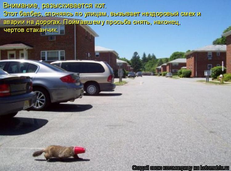 Котоматрица: Внимание, разыскивается кот.  Этот балбес, слоняясь по улицам, вызывает нездоровый смех и  аварии на дорогах. Поймавшему просьба снять, нако