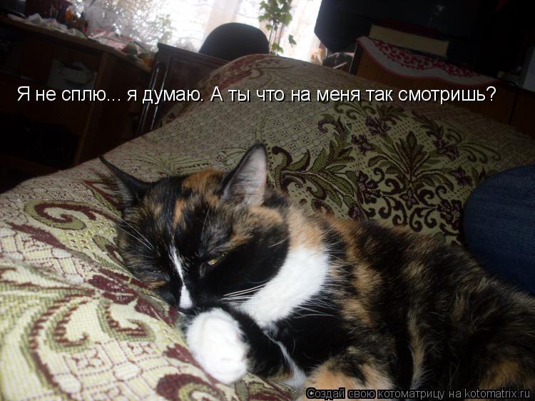 Котоматрица: Я не сплю... я думаю. А ты что на меня так смотришь?