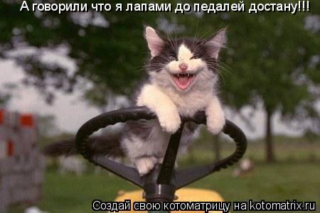Котоматрица: А говорили что я лапами до педалей достану!!!