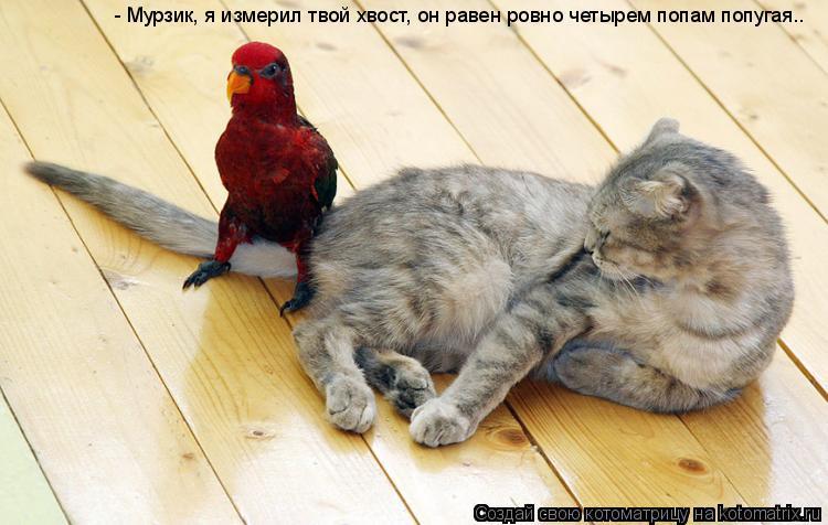 Котоматрица: - Мурзик, я измерил твой хвост, он равен ровно четырем попам попугая..