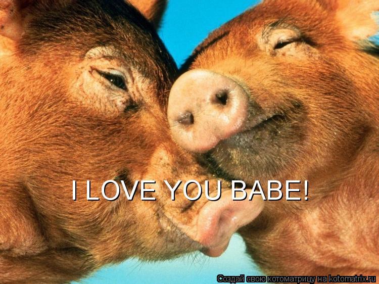 Котоматрица: I LOVE YOU BABE!