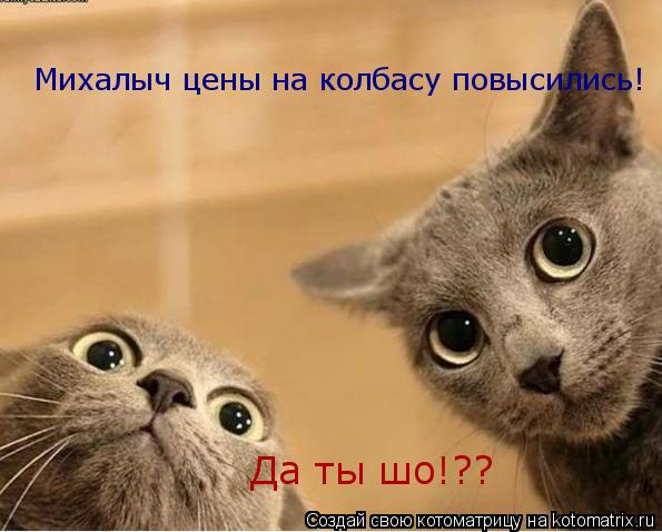 Котоматрица: Михалыч цены на колбасу повысились! Да ты шо!??