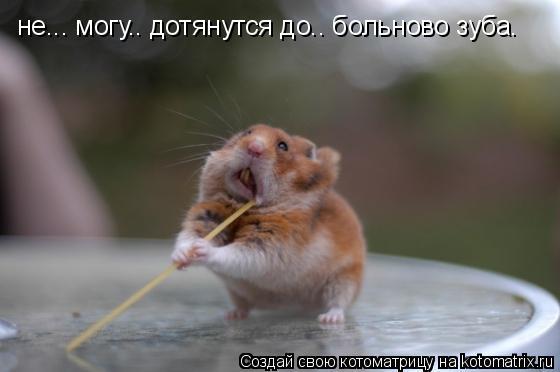 Котоматрица: не... могу.. дотянутся до.. больново зуба.