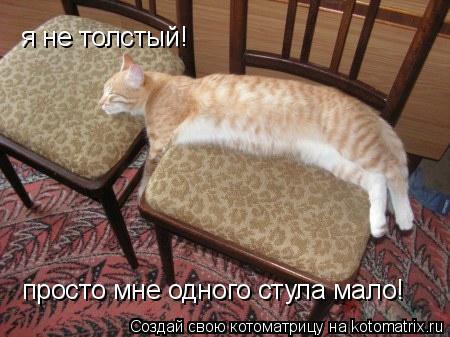 Котоматрица: я не толстый! просто мне одного стула мало!