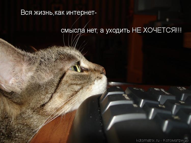 Котоматрица: Вся жизнь,как интернет-  смысла нет, а уходить НЕ ХОЧЕТСЯ!!!