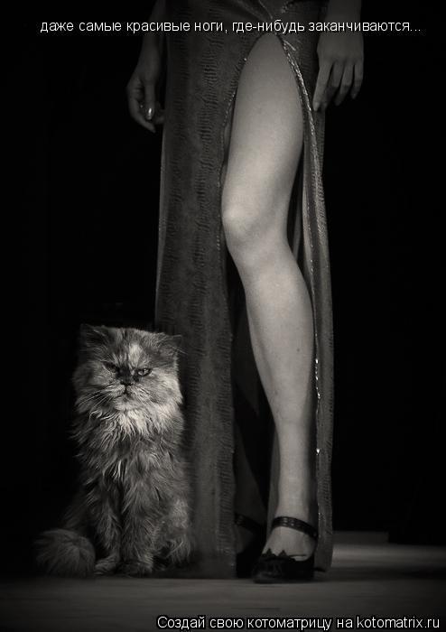 Котоматрица: даже самые красивые ноги, где-нибудь заканчиваются...
