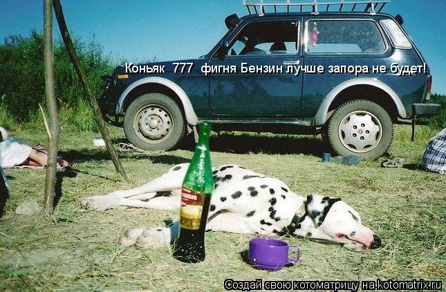 Котоматрица: Коньяк  777  фигня Бензин лучше запора не будет!