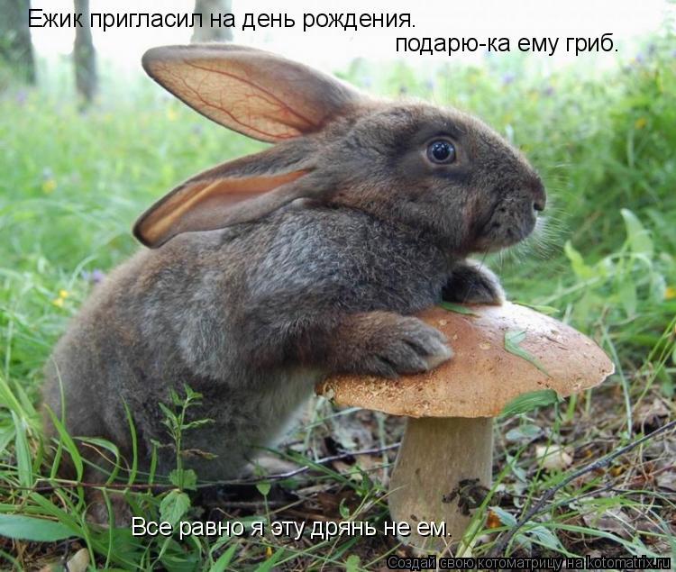 Котоматрица: Ежик пригласил на день рождения. подарю-ка ему гриб. Все равно я эту дрянь не ем.