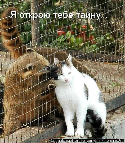 Котоматрица: Я открою тебе тайну...