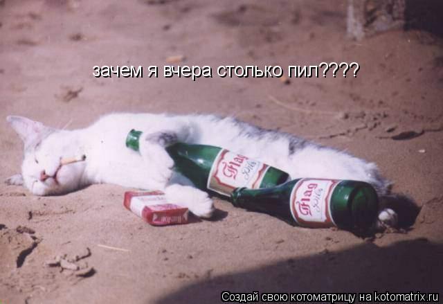 Котоматрица: зачем я вчера столько пил????