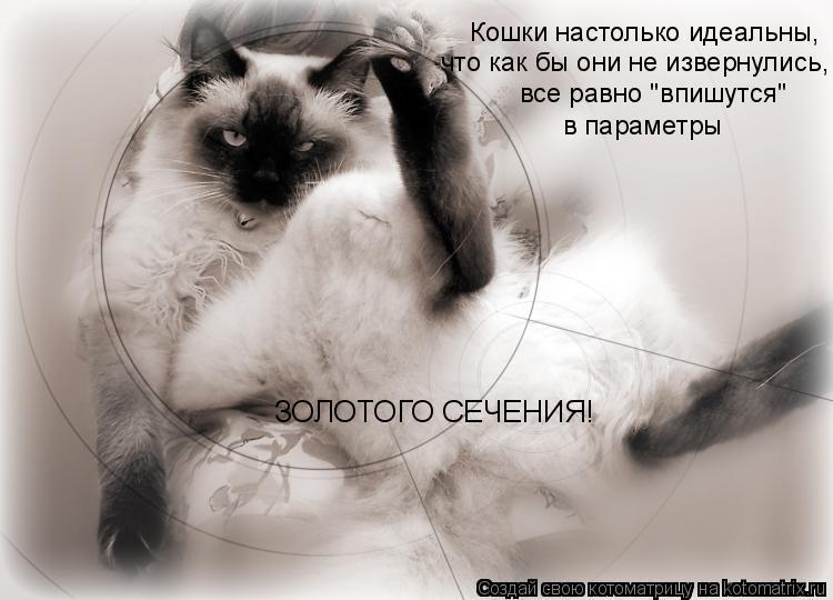 """Котоматрица: Кошки настолько идеальны, что как бы они не извернулись, все равно """"впишутся"""" в параметры ЗОЛОТОГО СЕЧЕНИЯ!"""