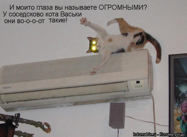 Котоматрица: И моито глаза вы называете ОГРОМНЫМИ? У соседсково кота Васьки  они во-о-о-от  такие!