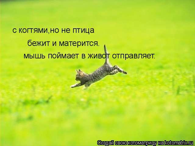 Котоматрица: с когтями,но не птица бежит и матерится. мышь поймает в живот отправляет.