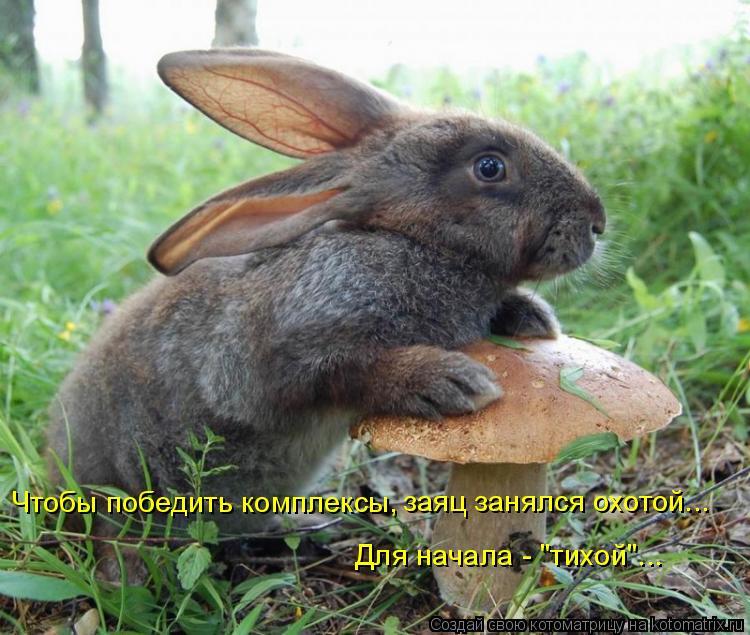 """Котоматрица: Чтобы победить комплексы, заяц занялся охотой... Для начала - """"тихой""""..."""