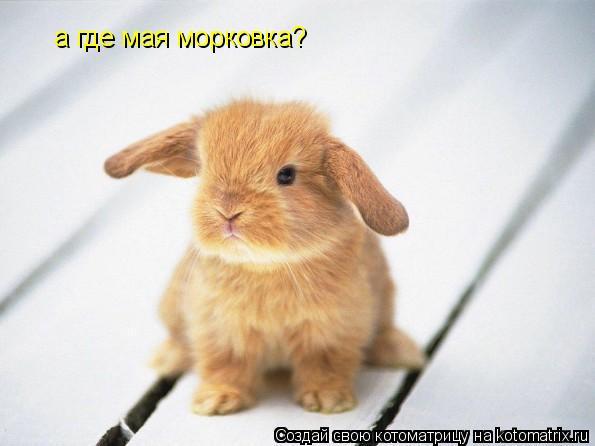 Котоматрица: а где мая морковка?